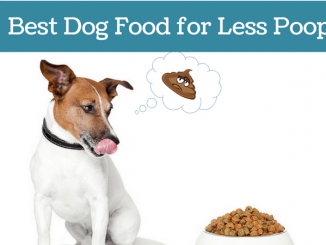 Best-Dog-Food-for-Less-Poop