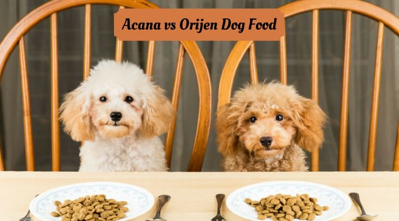 Photo of Acana vs Orijen Dog Food – Which One is Best?