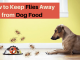 How-to-Keep-Flies-Away-from-Dog-Food-Top-Solution (1)