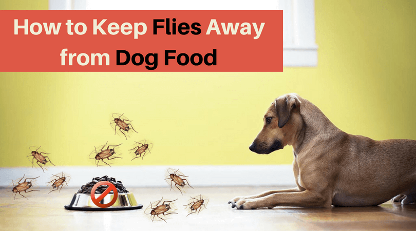 Photo of How to Keep Flies Away from Dog Food? – Top Solution