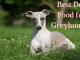 Best-Dog-Food-for-Greyhounds