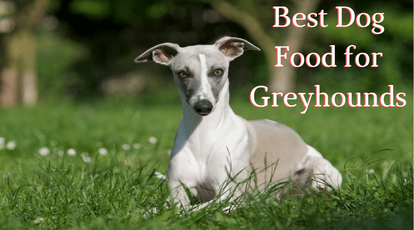 Photo of Best Food for Greyhounds – Get Top Quality Food For Your Pooch