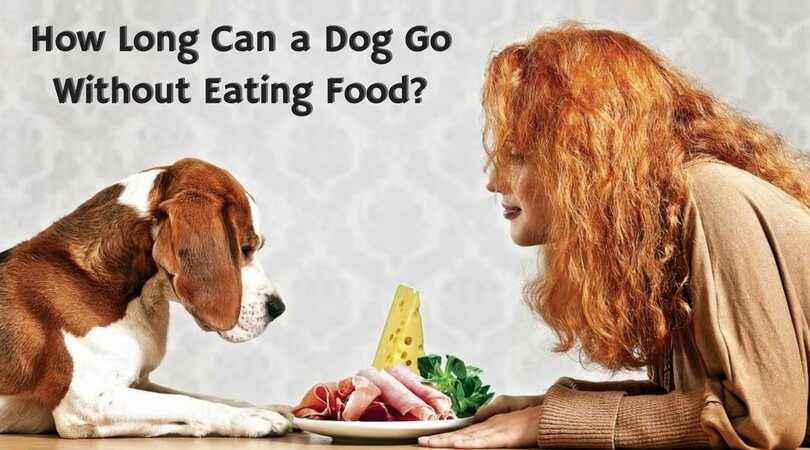 Photo of How Long Can a Dog Go Without Eating Food? – Check it Now