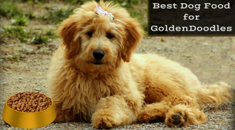 Photo of Best Dog Food for Goldendoodles: Feed Your Puppy (2020 Update)