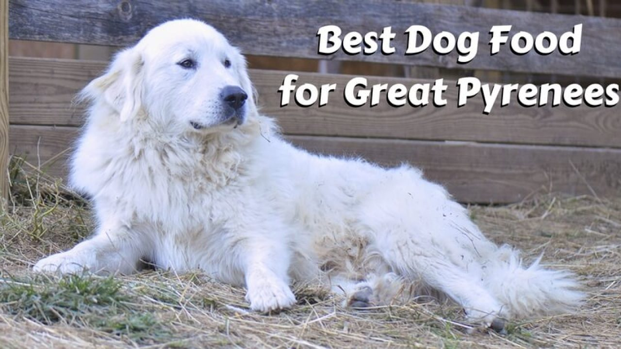 Best Dog Food For Great Pyrenees T