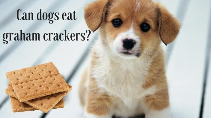 Can dogs eat graham crackers_