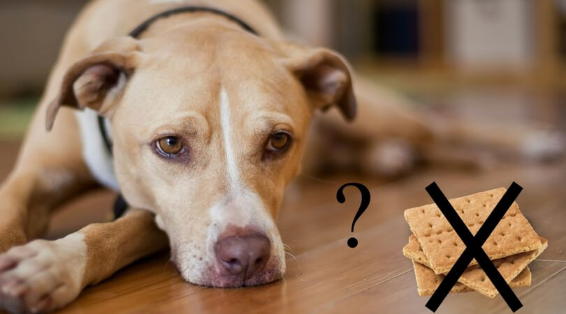 Are graham crackers bad for dogs?