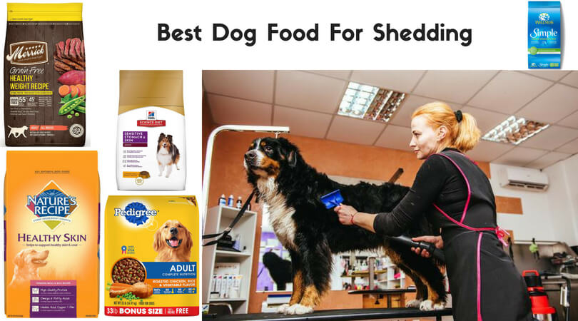 Photo of Best Dog Food for Shedding and Dry Skin | Take Care of Beloved Pooch