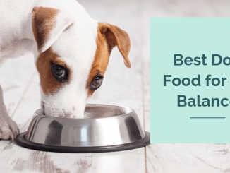 Best Dog Food for pH Balance