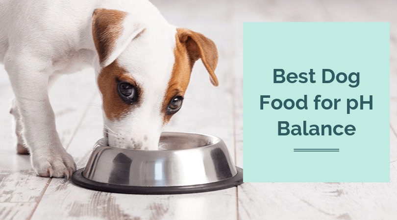 Photo of Best Dog Food for pH Balance – Top Picks by Dog Veterinary Experts