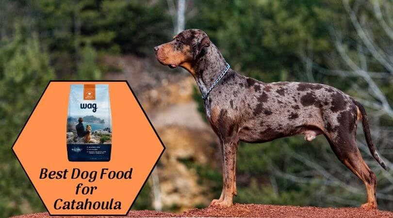 Photo of Best Dog Food for Catahoula – Top Catahoula Leopard Dog Food of 2019
