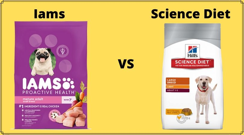 Photo of Iams vs Science Diet: Choose the best Brand for your Pet