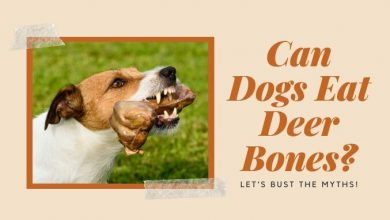 Photo of Can Dogs Eat Deer Bones – Let's Bust The Myths!