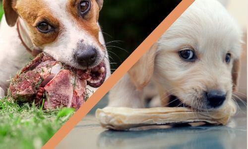 Raw vs. Cooked Dog Bones
