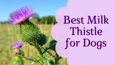Photo of Best Milk Thistle for Dogs – Top Rated Thistle for Dogs