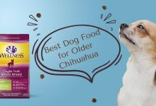 Photo of Best Dog Food for Older Chihuahua – Top 5 Dog Food Reviews of 2020
