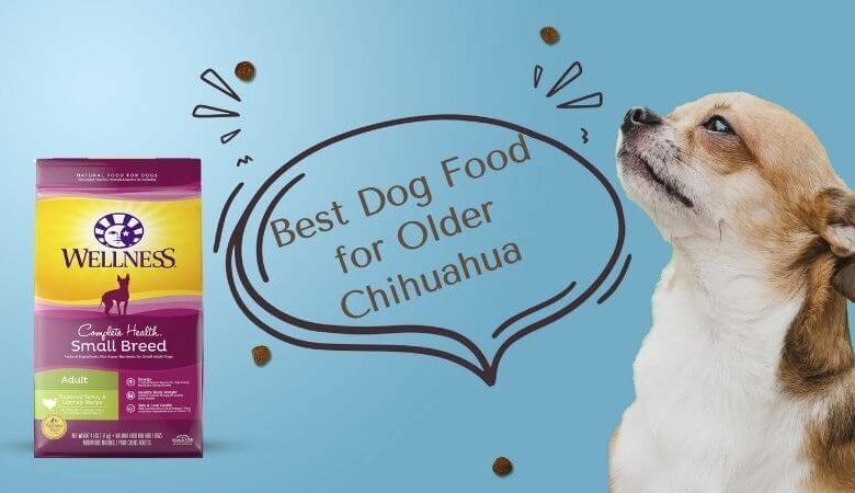 Best Dog Food for Older Chihuahua