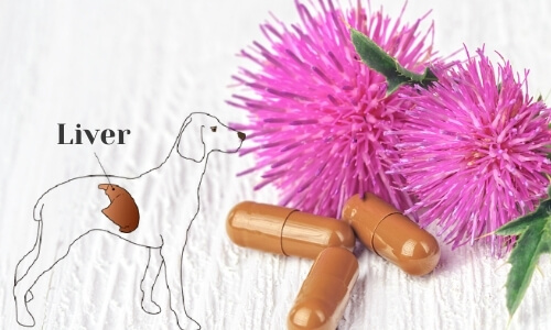Milk Thistle for Dogs Liver
