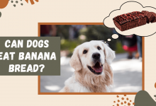 Photo of Can Dogs Eat Banana Bread – A Complete Guide by Expert