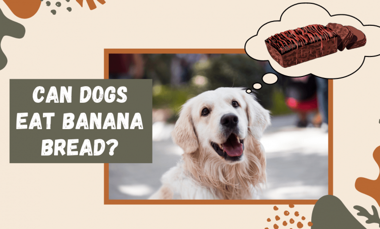 Can Dogs Eat Banana Bread